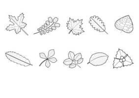 35 Malvorlage Blatt Herbst   Besten Bilder von ausmalbilder