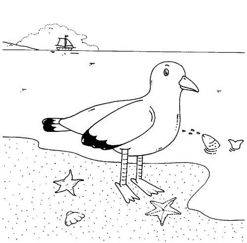 Kostenlose Malvorlage Vögel Möwe am Meer zum Ausmalen