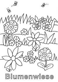 Ausmalbilder Blumen Wiese Download Johannas Designs
