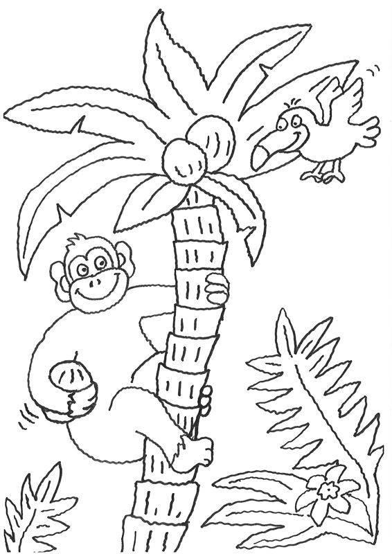 Kostenlose Malvorlage Tiere Affe holt Kokosnüsse zum Ausmalen