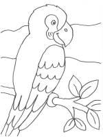 Kostenlose Malvorlage Vögel Papagei auf einem Ast zum ...