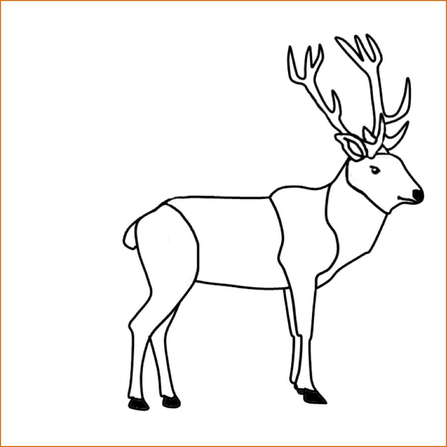 Ausmalbild Tiere Ausmalbild Hirsch kostenlos ausdrucken