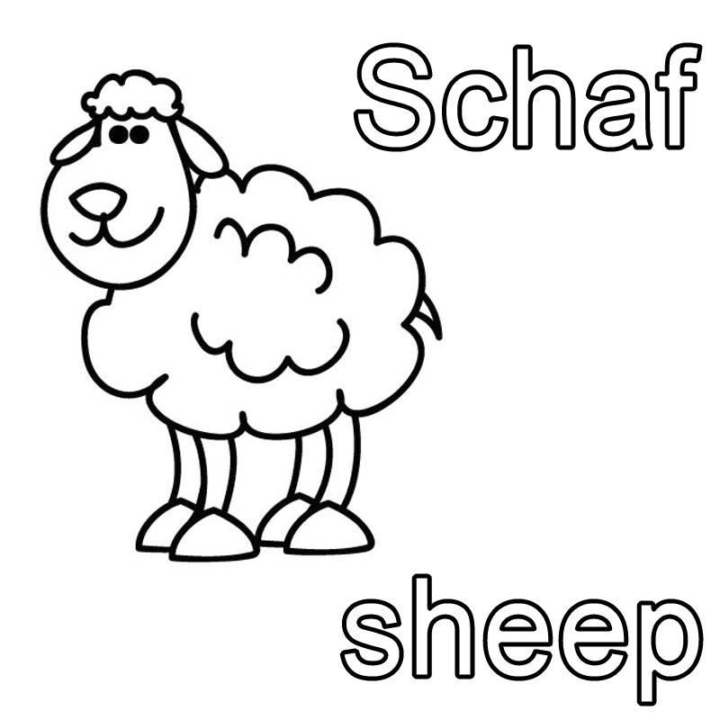 Kostenlose Malvorlage Englisch lernen Schaf - sheep zum