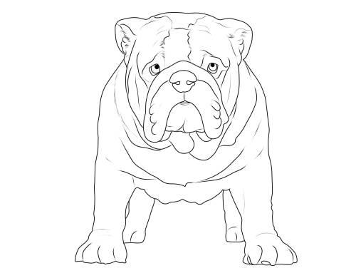 Malvorlage Bulldogge Coloring and Malvorlagan
