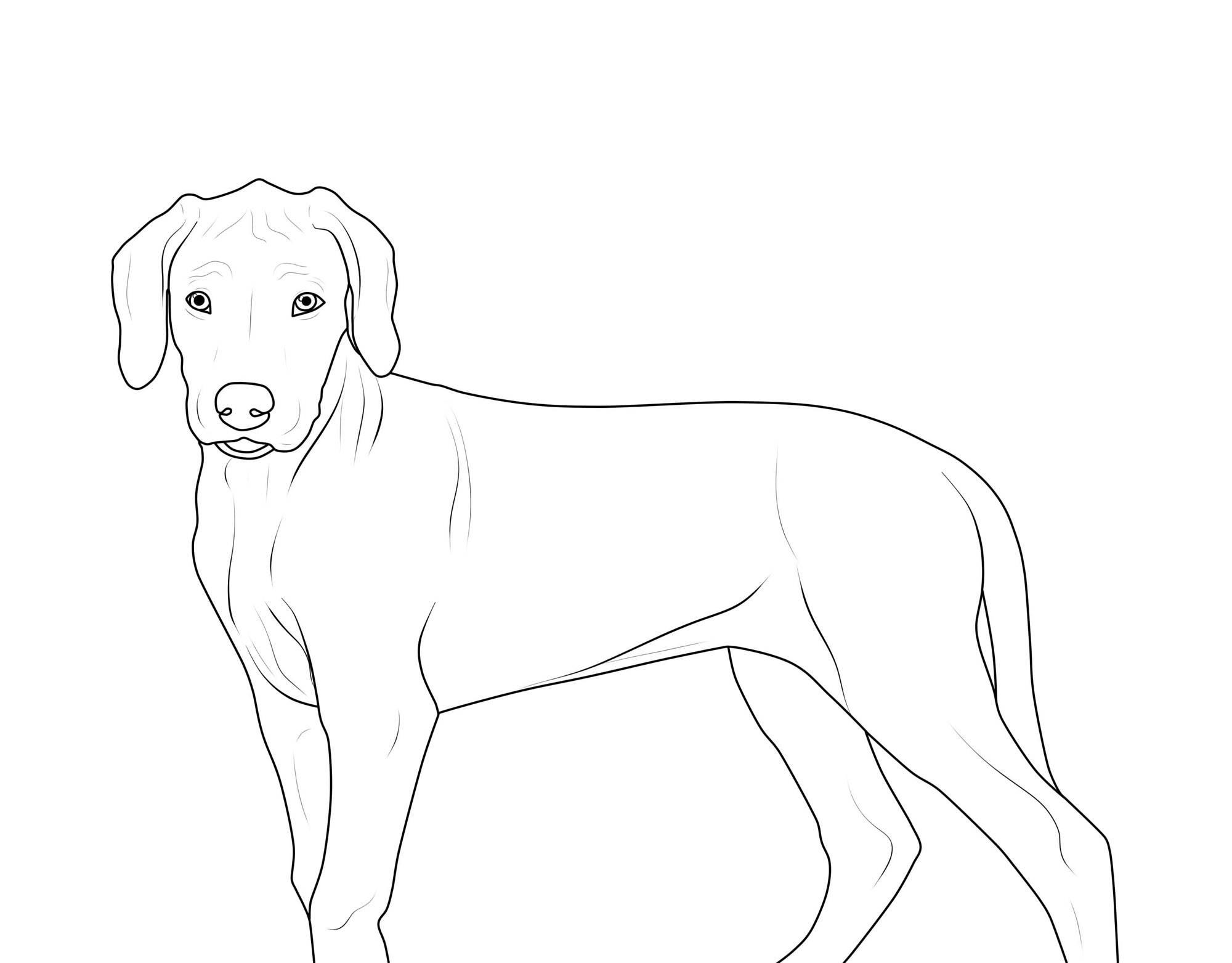 Ausdrucken Malvorlage Hund - Kinder zeichnen und ausmalen