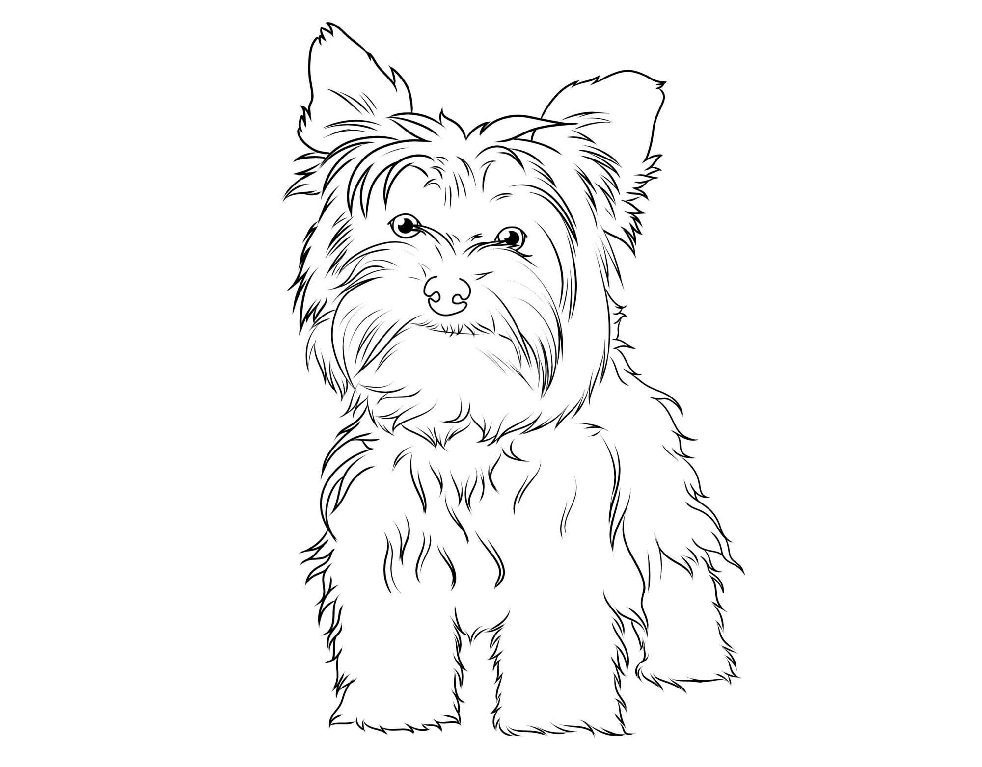 Kostenlose Malvorlage Hunde Yorkshire Terrier zum Ausmalen