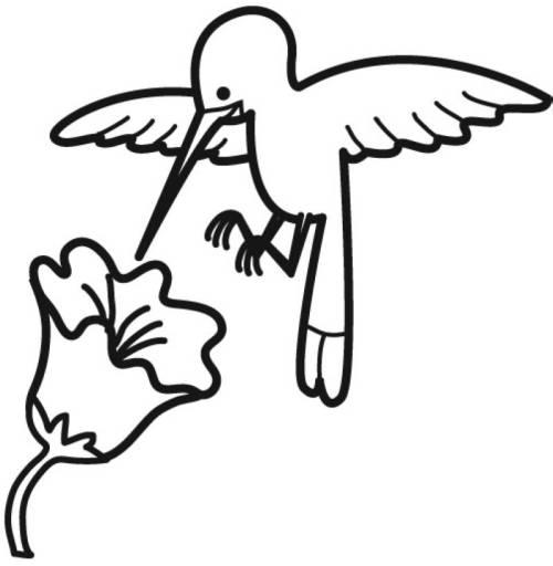 Kostenlose Malvorlage Vögel Kolibri mit Blüte zum Ausmalen