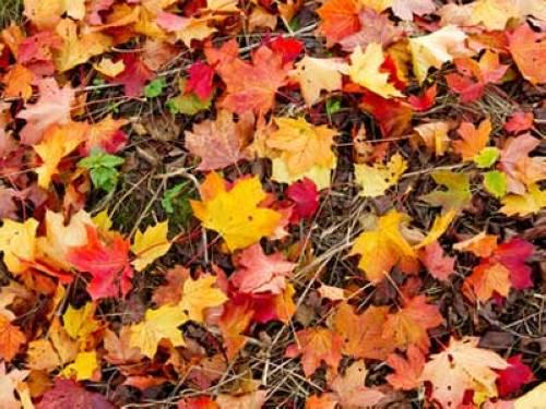 Warum Sind Die Bltter Im Frhling Grn Und Im Herbst Rot