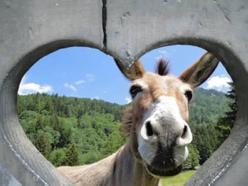 Wissen Ber Haustiere Esel
