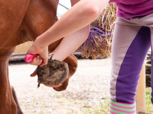 Wissen über Haustiere Mein Pferd wackelt beim Hufkratzen