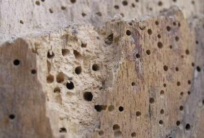 Hout herstellen na houtworm