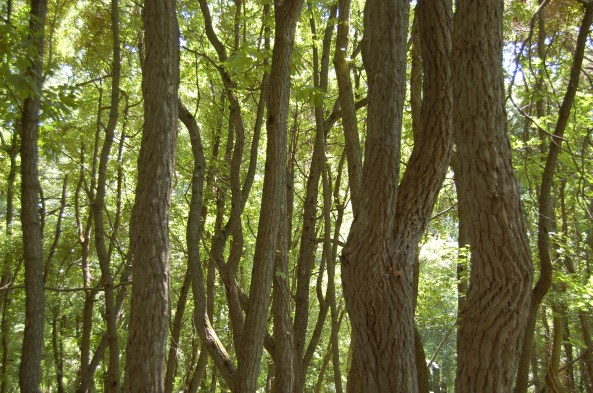 Image result for tree trunks