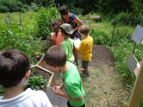 Maggie Mills leading Campers in Native Pollinator Garden: Learning and counting pollinators with Pollinator Data Sheets