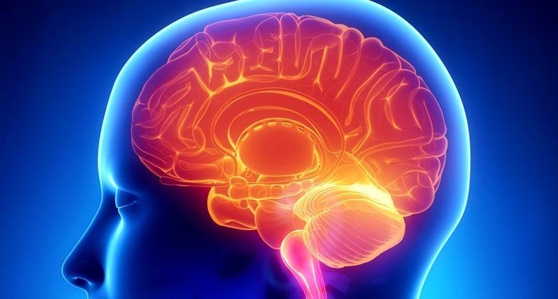 Gio's Cosmic Emporium - Page 6 Brain-image-Shutterstock1-800x430