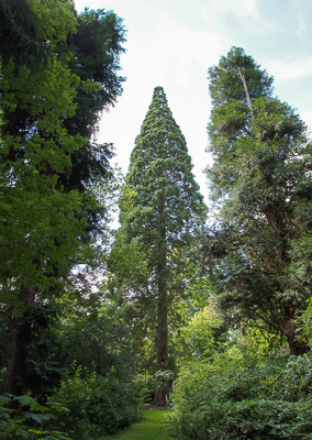 Botanischer Garten Loismann
