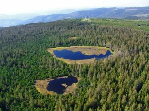 Luftbild Hohlohturm <br>Bild: Infozentrum Kaltenbronn