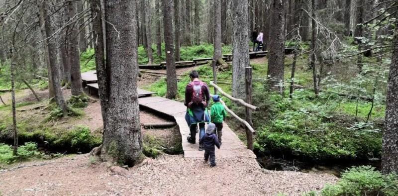 Holzstege führen über Moor