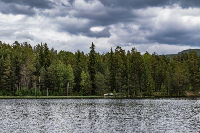 Sweden-Bonfire