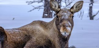 Reise nach Kiruna