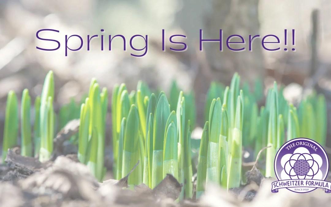 Spring Brings Renewal and Balance