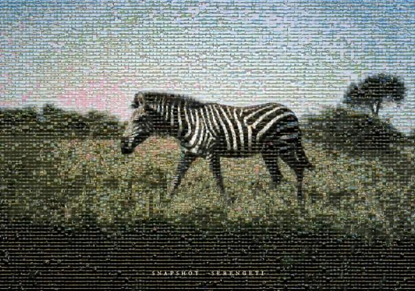 Snapshot_Serengeti_Zebra_Poster small