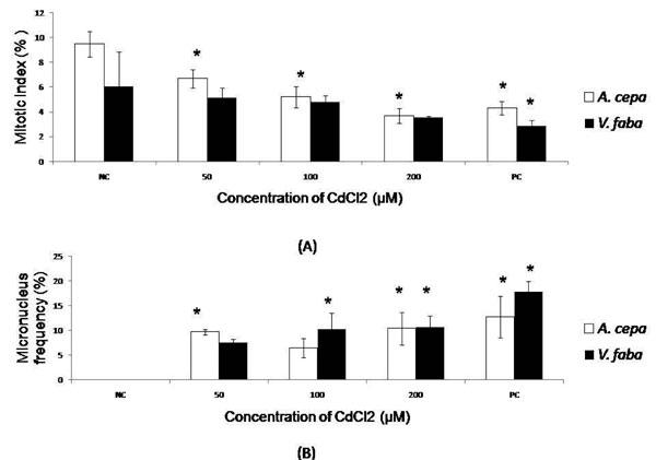 Sensitivity of Allium cepa and Vicia faba towards cadmium