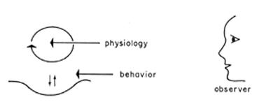 El origen de las especies por medio de la deriva natural