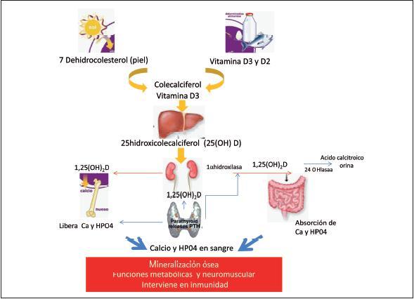 Metabolismo do Cálcio e Fosfato - Química Fisiológica