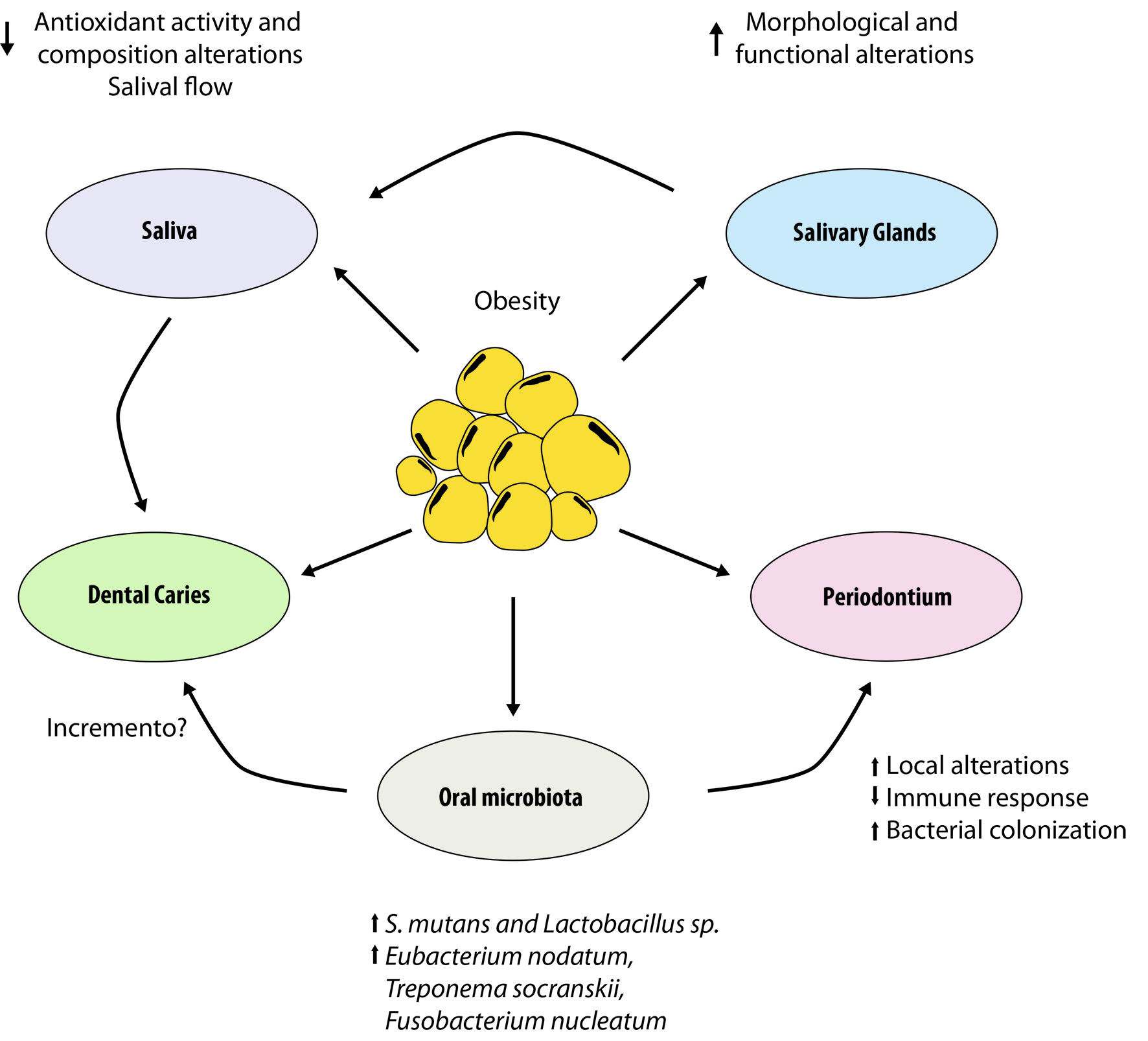 hight resolution of figure 1 interrelationship between obesity and oral cavity it shows the relationship between obesity and alterations in the salivary glands and how they