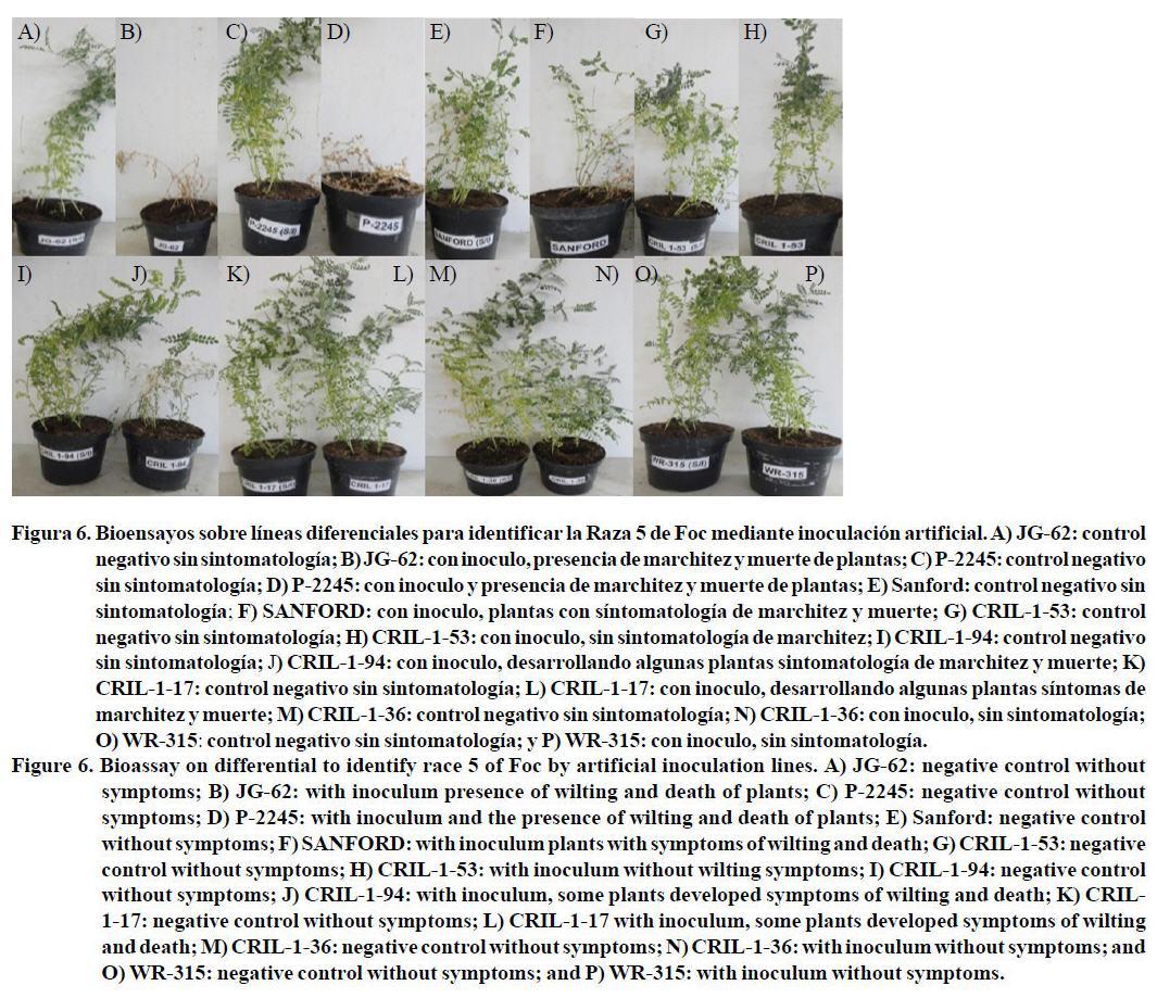 Identificacion Molecular Y Biologica De Las Razas 0 Y 5 De
