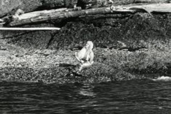 british-columbia-in-canada-mermaids