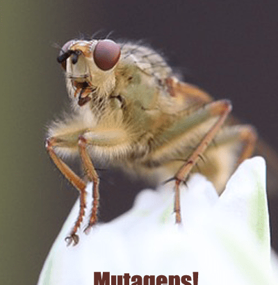 Fruit fly screaming about mutagens