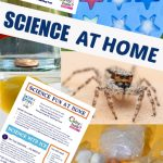 Everything You Need For Science Experiments At Home Science Experiments For Kids