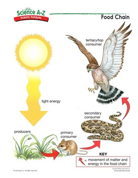 savanna animal food chain diagram cadet heater wiring science a z chains grades 5 6 life unit diagrams teacher s guide