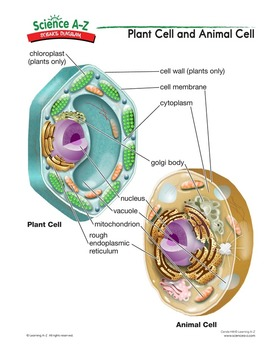 influenza venn diagram single phase capacitor run motor wiring science a-z inside living things grades 5-6 unit