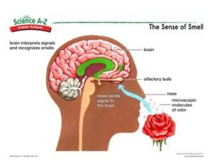 Science AZ Senses Grades K2 Life Science Unit
