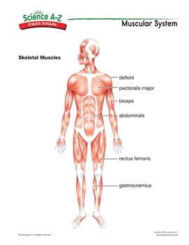 Science AZ Human Body Grades 34 Life Science Unit