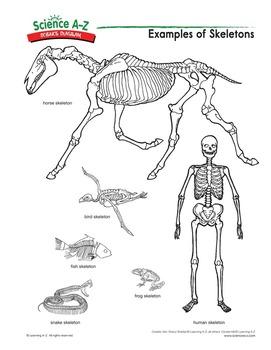 Science A-Z Animals Grades K-2 Life Science Unit