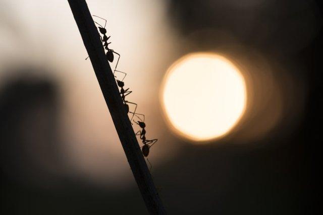 Fascinante ciência de como formigas organizar suas colônias