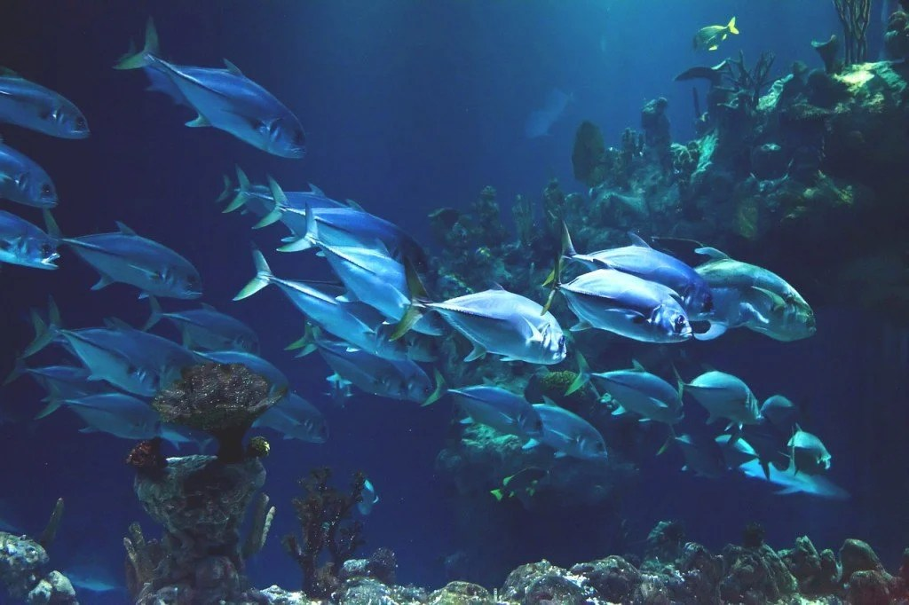Fishes in deep sea