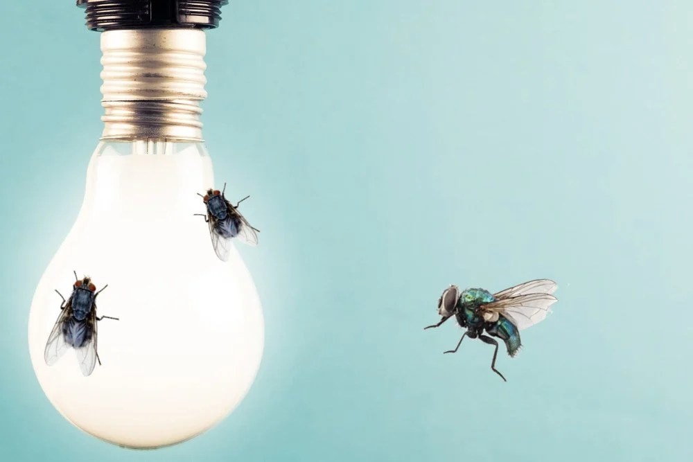 Phototaxis: Why Are Bugs Attracted To Light? » Science ABC