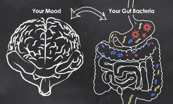 A conexão Gut-Brain (Crédito da foto: TL Furrer / Fotolia)