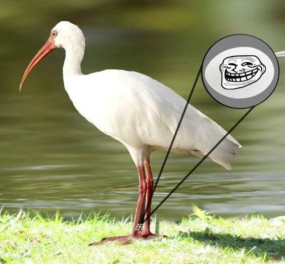 Ovos engate um passeio sobre as partes do corpo de aves e animais terrestres sem o último mesmo saber sobre ele