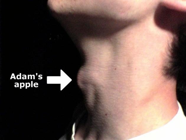 Myneck adams apple Um exemplo de proeminência laríngea masculina.