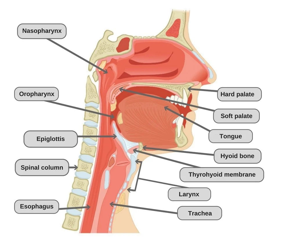 medium resolution of dry throat diagram wiring diagram load dry throat diagram