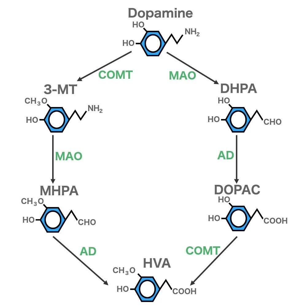 hight resolution of dopamine 3mt dhpa mhpa dopac hva jpg
