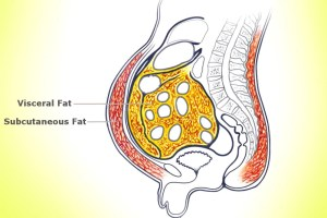 How Does Our Body Know Where To Store Fat? » Science ABC