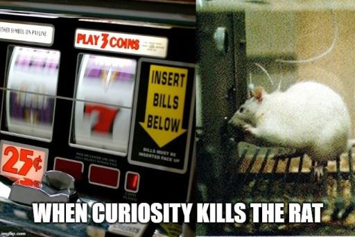 quando a curiosidade mata o meme do rato