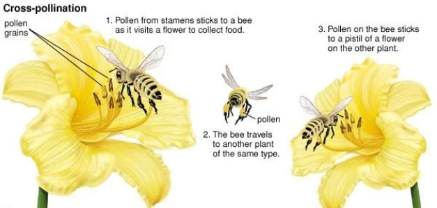 bee polling