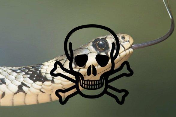 perigo de cobra